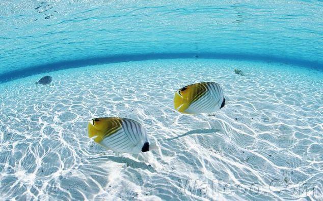 Maldives_Water_and_Fish_JY012_350A